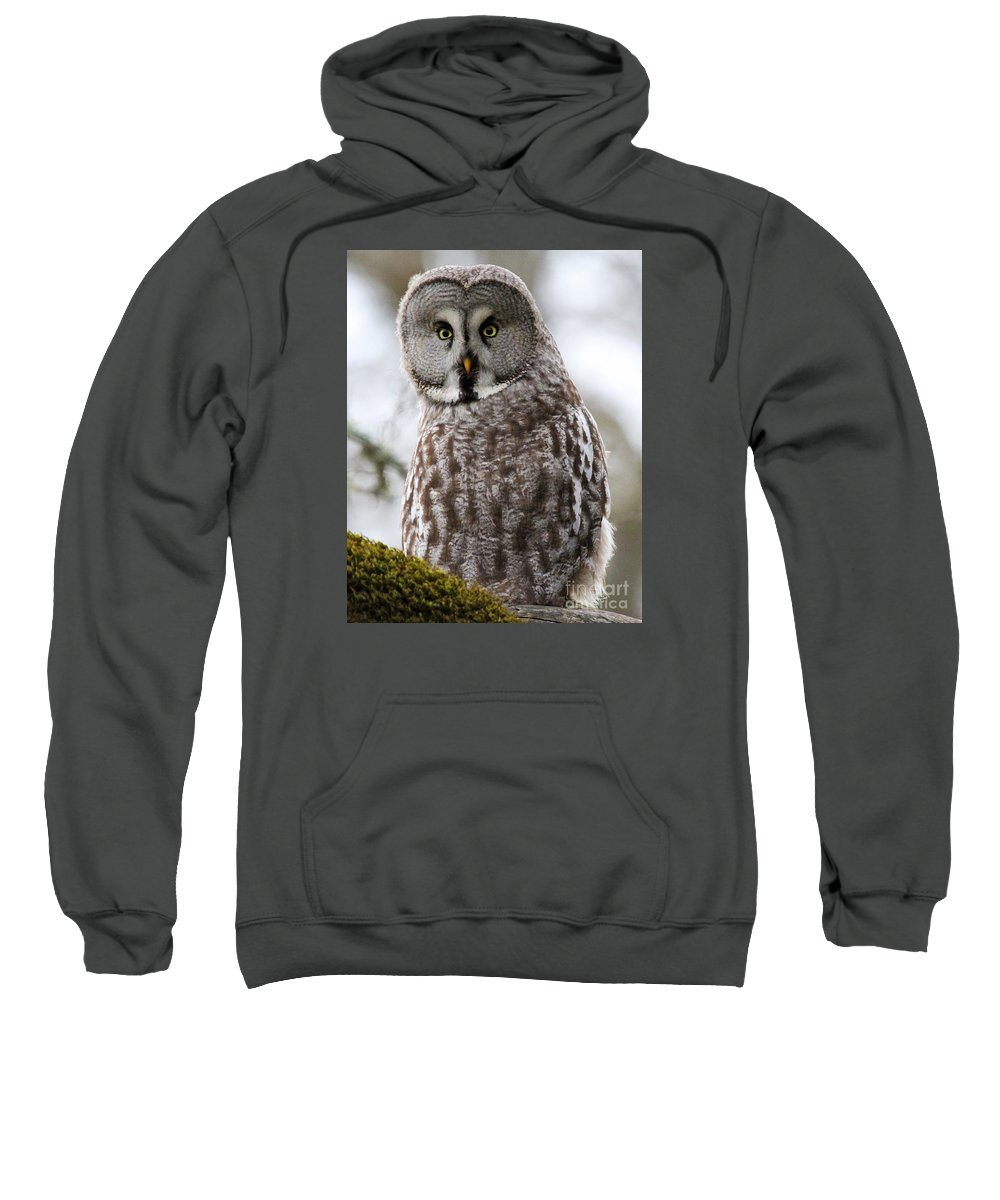Great Grey Owl Sweatshirt featuring the photograph Who's Looking At Who? by Emma England