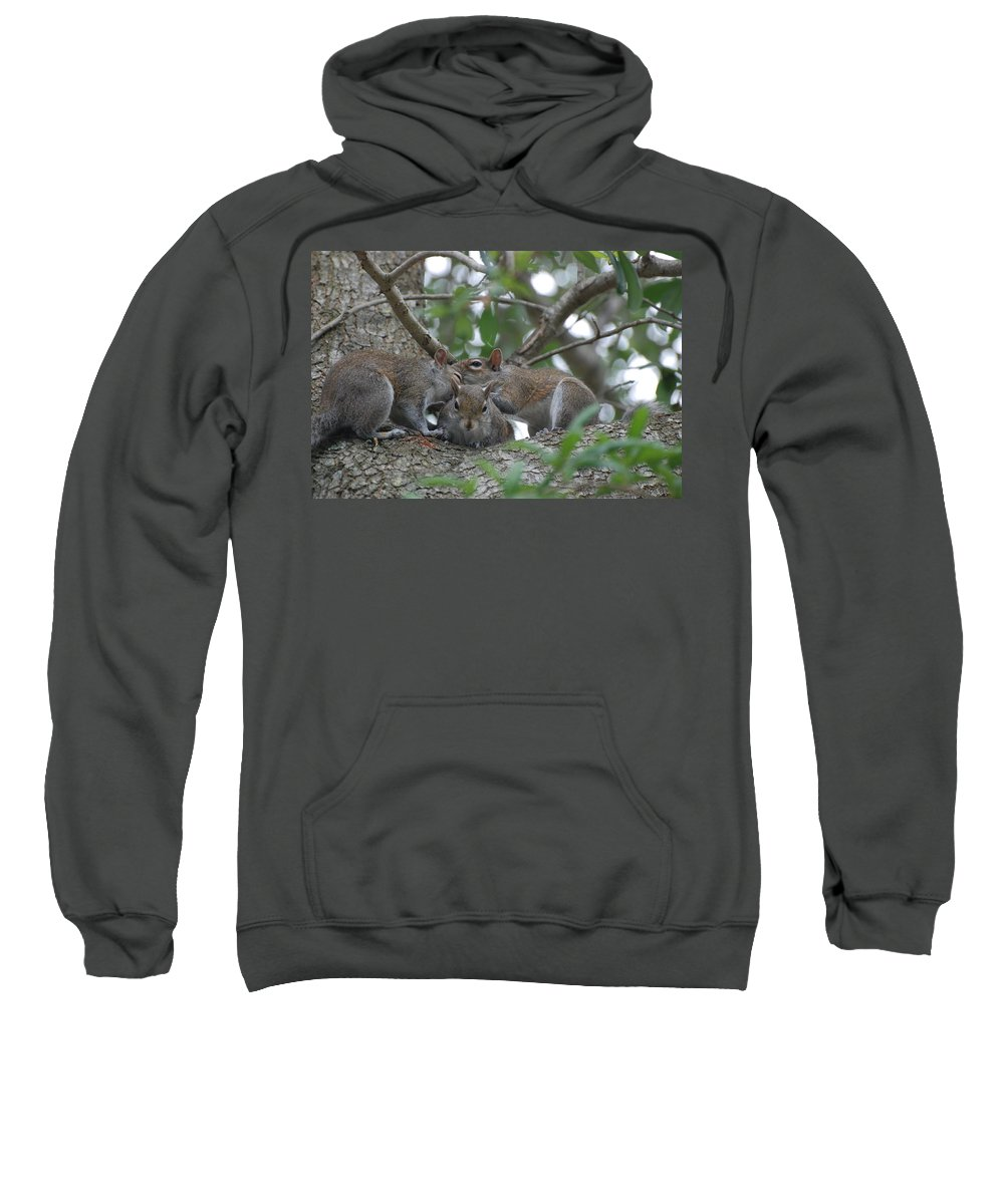 Squirrel Sweatshirt featuring the photograph Why Me by Rob Hans