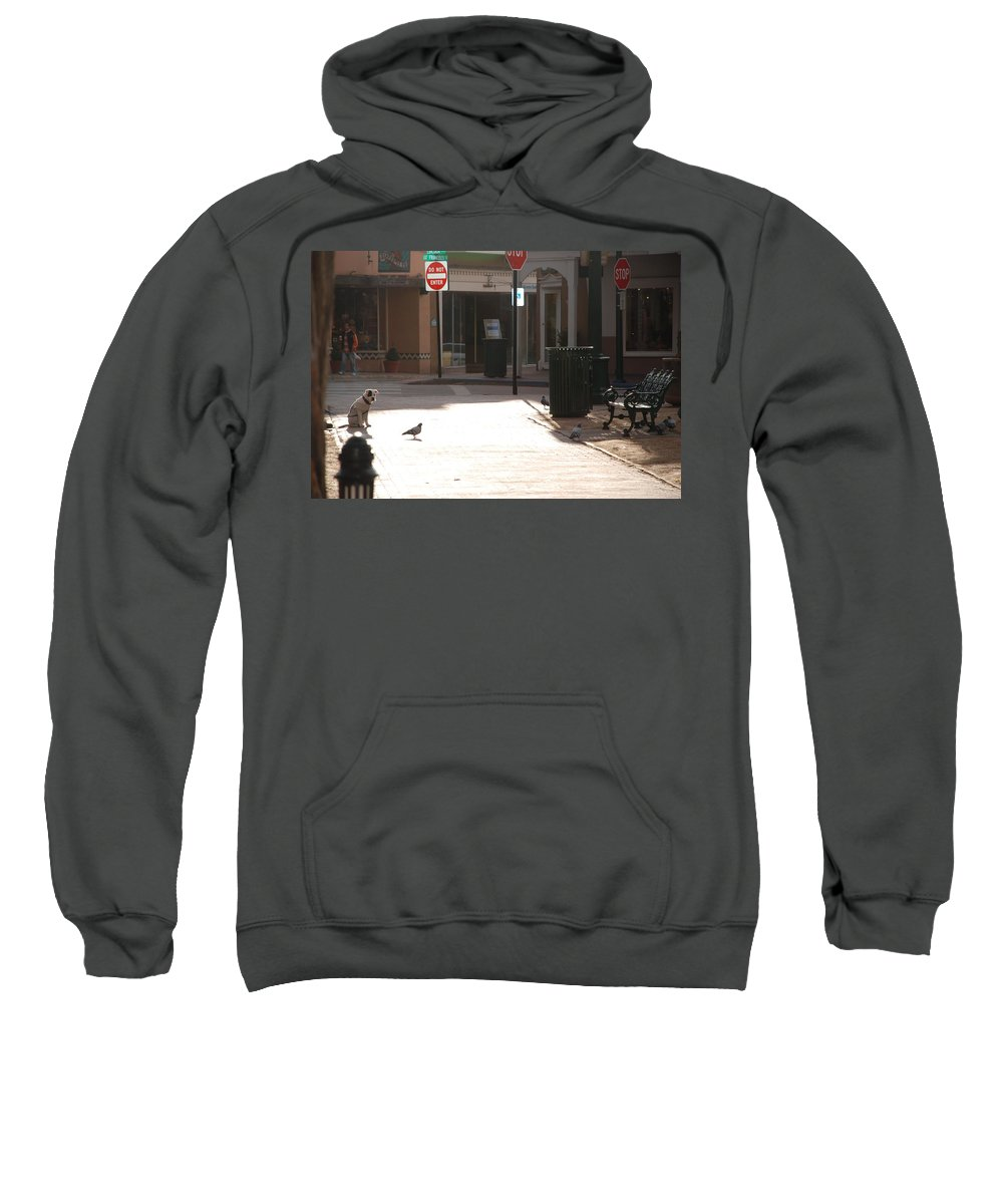 Dog Sweatshirt featuring the photograph Why Question Mark by Rob Hans