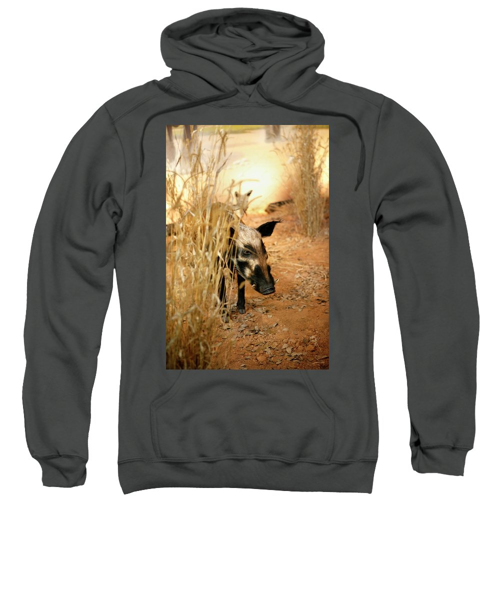Wild Sweatshirt featuring the photograph Wild Boar by Marilyn Hunt
