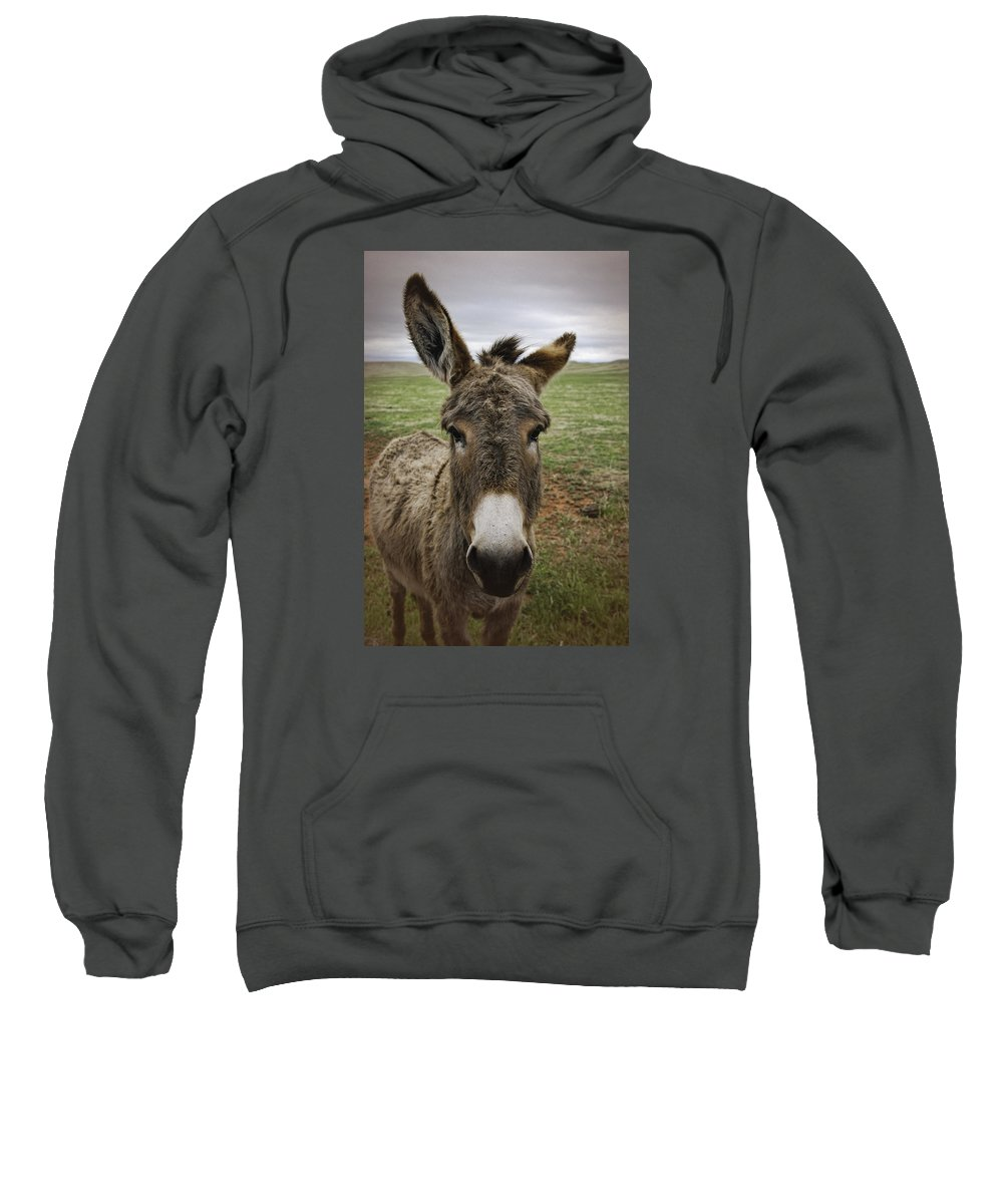 Wild Burro Sweatshirt featuring the photograph Wild Burro by Phyllis Taylor