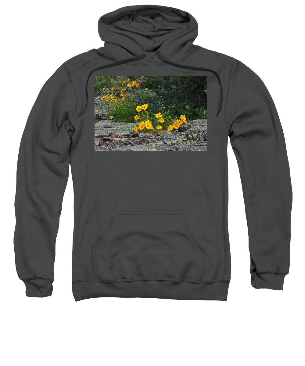 Wildflowers Sweatshirt featuring the photograph Wild Coreopsis On Hughes Mountain 1 by Greg Matchick