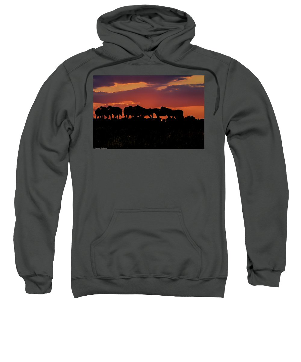 Horses Sweatshirt featuring the photograph Wild Mustangs At Sunset by Tommy Anderson