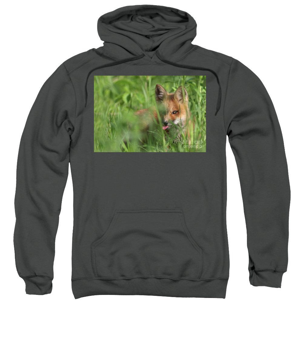 Adorable Sweatshirt featuring the photograph Wild Red Fox Puppy by Mircea Costina Photography