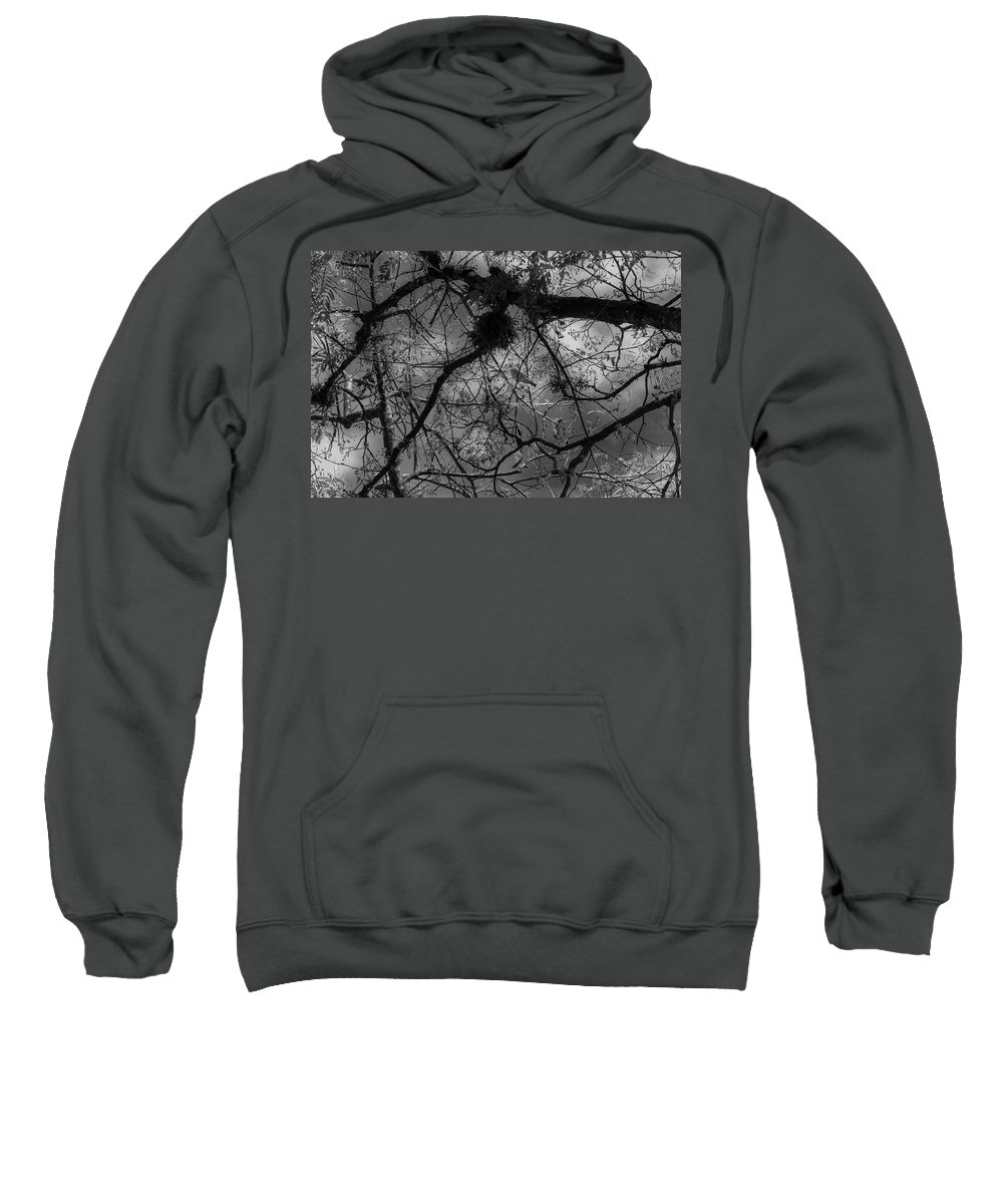 Bird Sweatshirt featuring the photograph Wild Soul by Vinicius Silva Couto