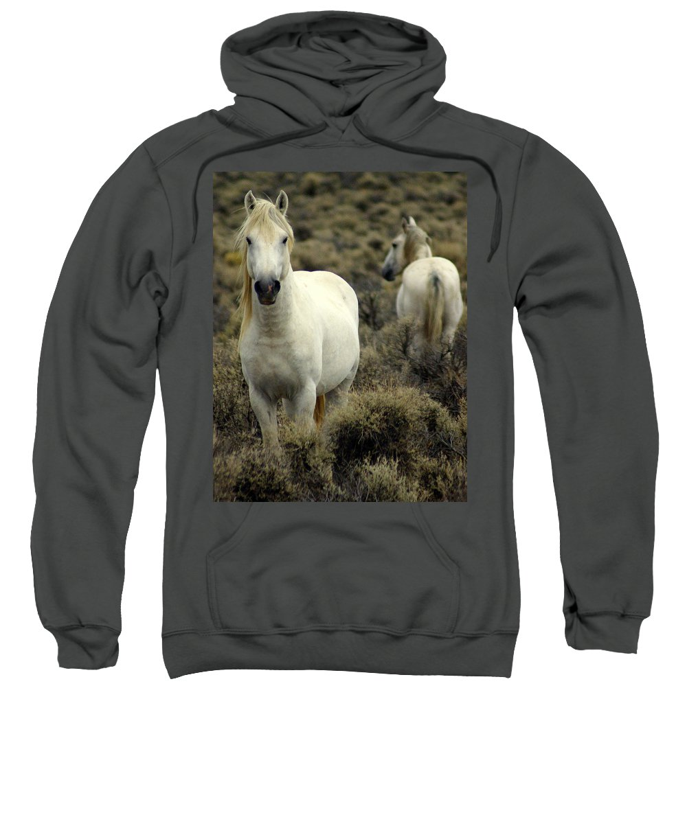 Wild Horses Sweatshirt featuring the photograph Wild Stallion by Marty Koch