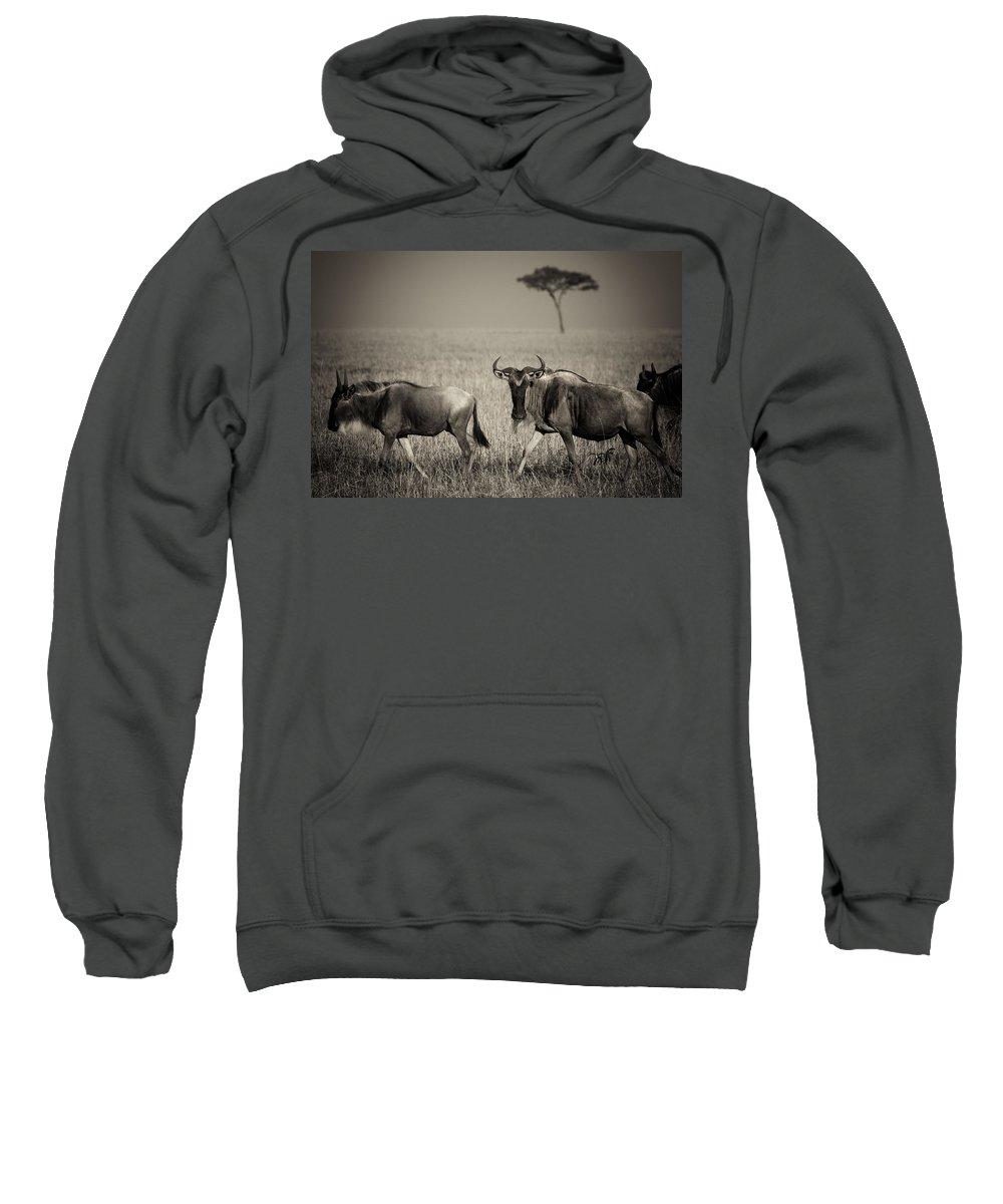 Wildebeest Sweatshirt featuring the photograph Wildebeest 8947b by Jeff Grabert