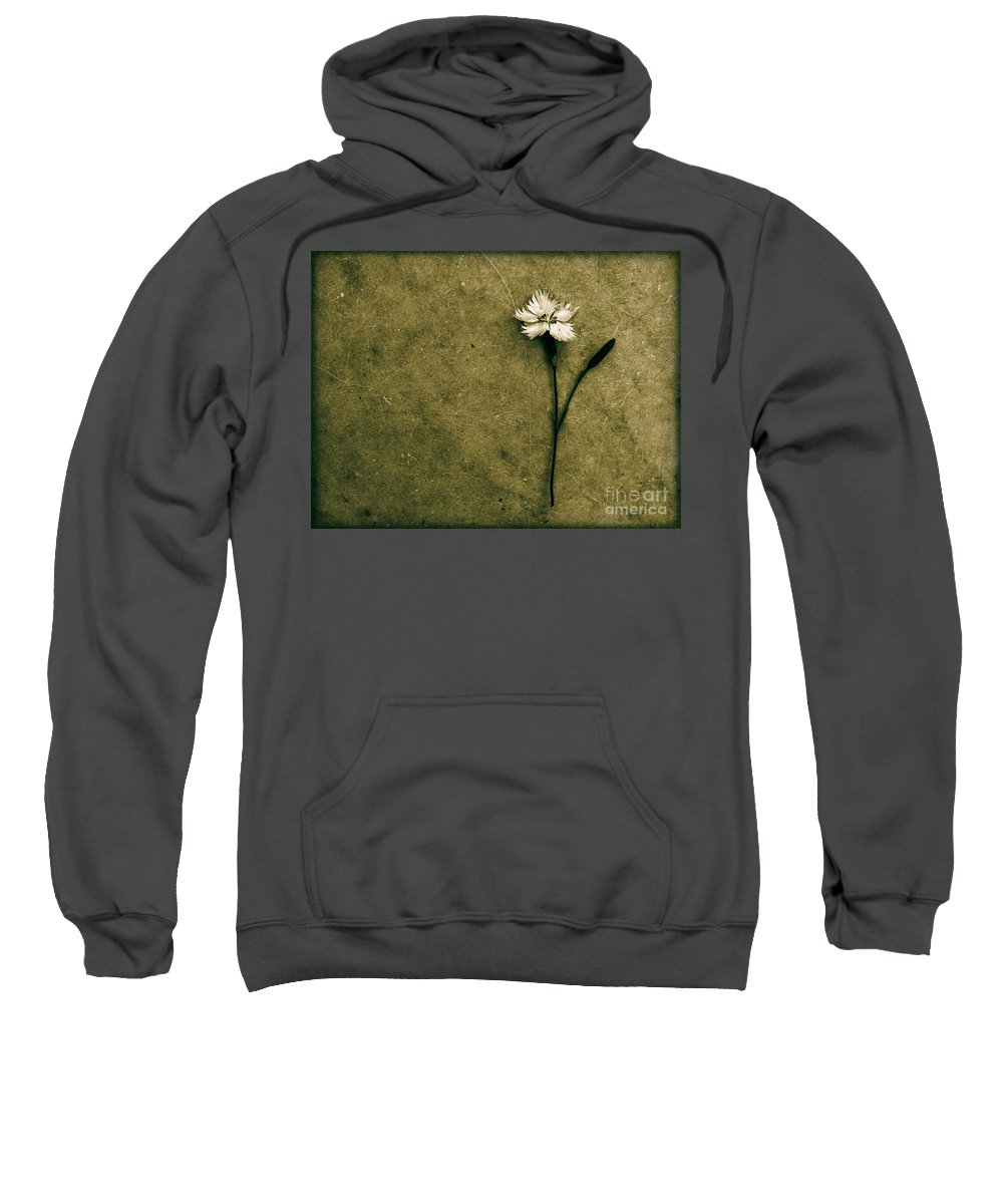 Dipasquale Sweatshirt featuring the photograph Will You Stay With Me Will You Be My Love by Dana DiPasquale