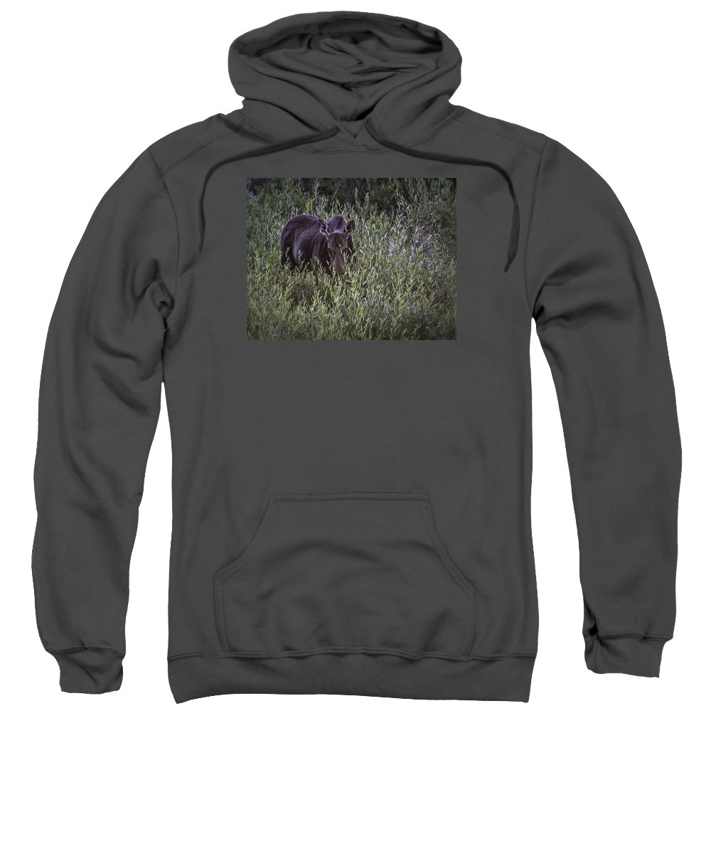Willows Sweatshirt featuring the photograph Willow Delite by Elizabeth Eldridge