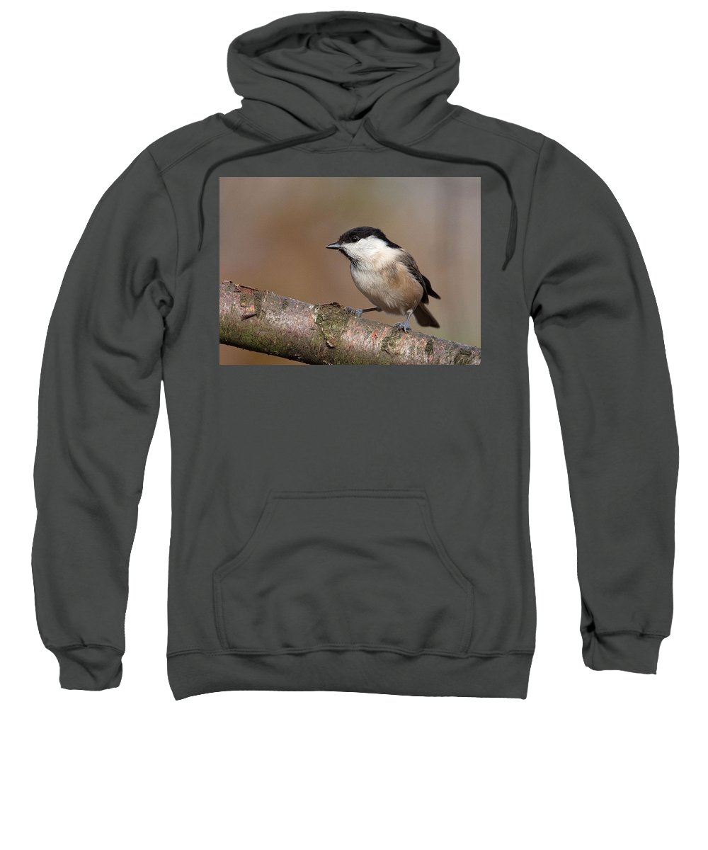 Willow Tit Sweatshirt featuring the photograph Willow Tit by Bob Kemp