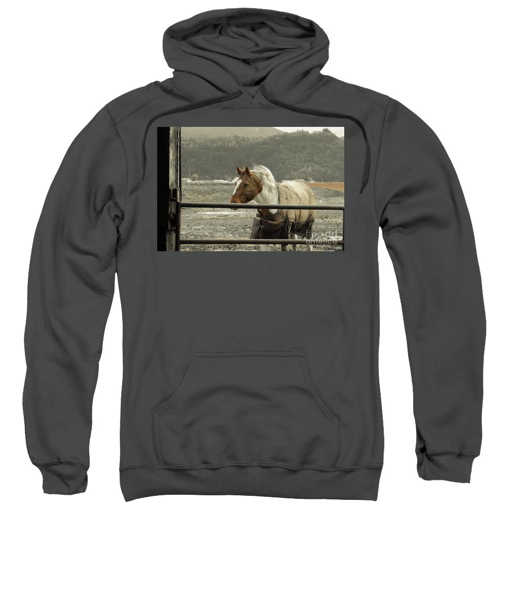 Clay Sweatshirt featuring the photograph Windy In Mane by Clayton Bruster