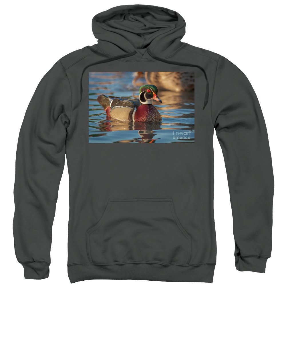 Cutts Nature Photography Sweatshirt featuring the photograph Wood Duck 4 by David Cutts