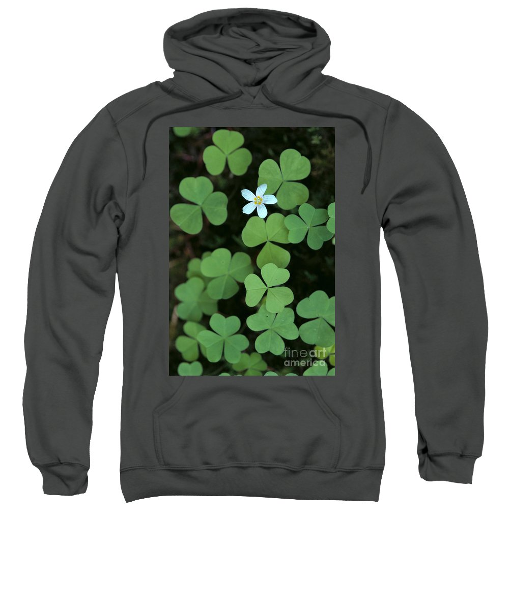 Bloom Sweatshirt featuring the photograph Wood Sorrel Flower by Greg Vaughn - Printscapes