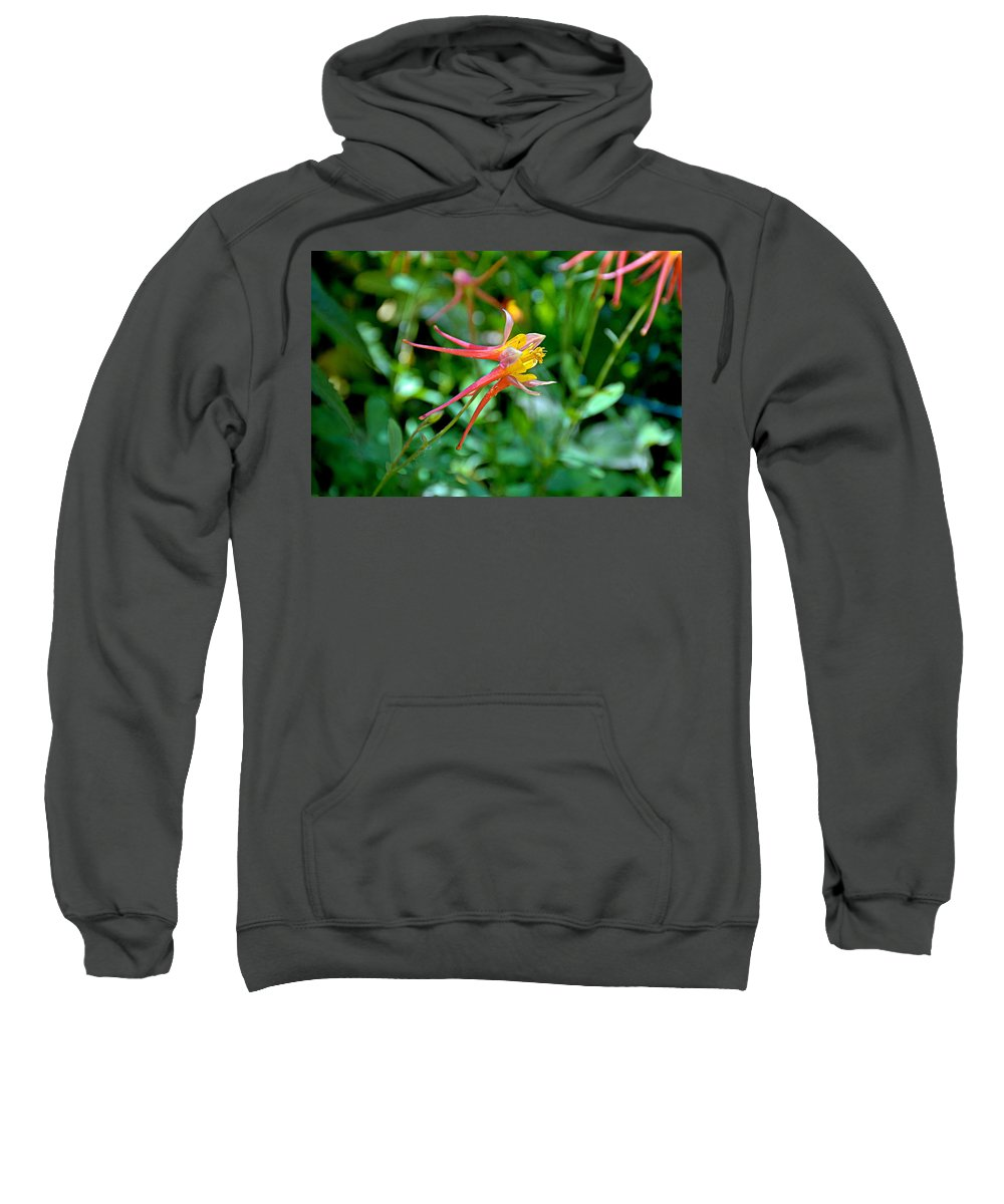 Winter Park Sweatshirt featuring the photograph Wp Floral Study 3 2014 by Robert Meyers-Lussier