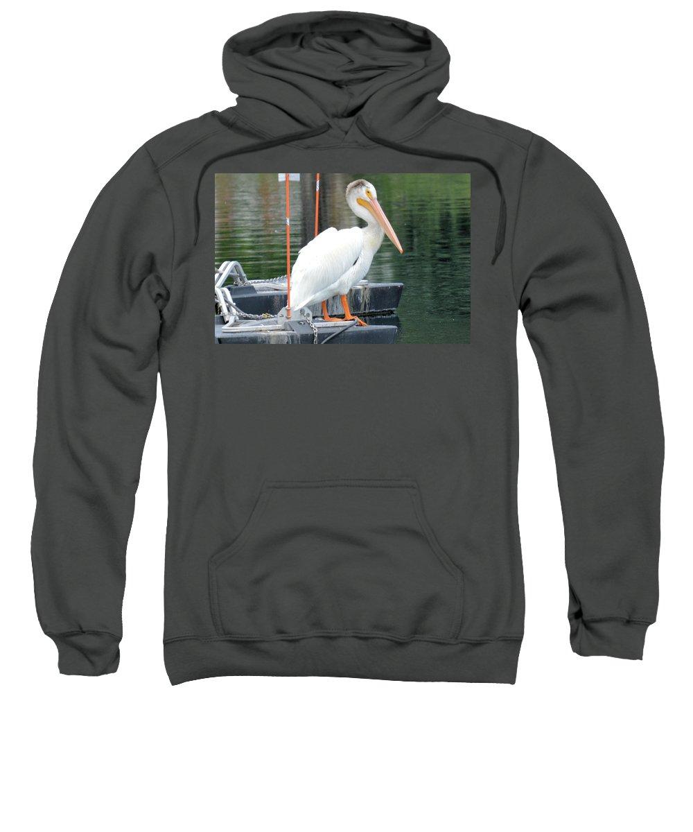 Bird Sweatshirt featuring the photograph Wyoming Pelican by Wendy Fox