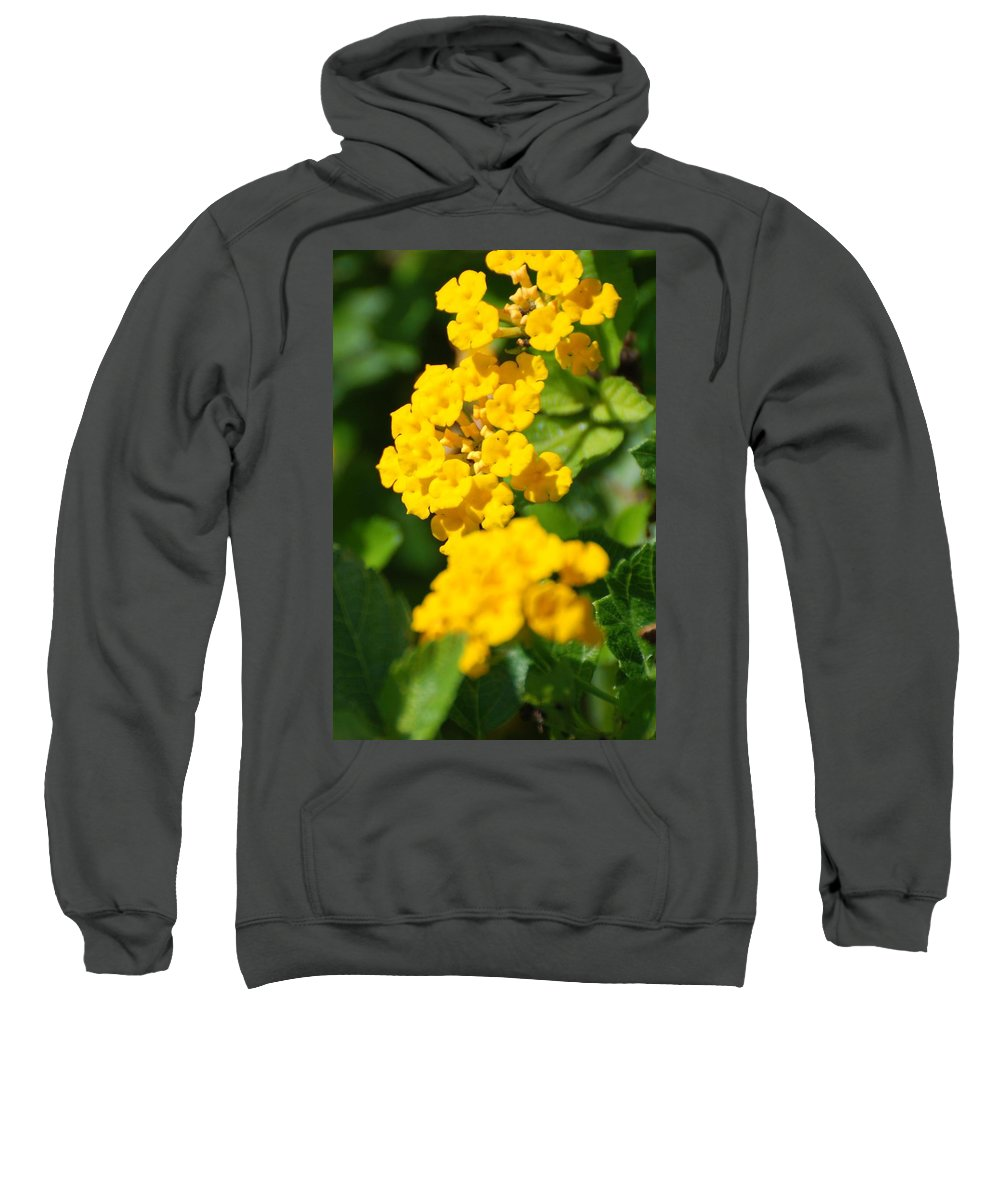 Flowers Sweatshirt featuring the photograph Yellow Blooms by Rob Hans