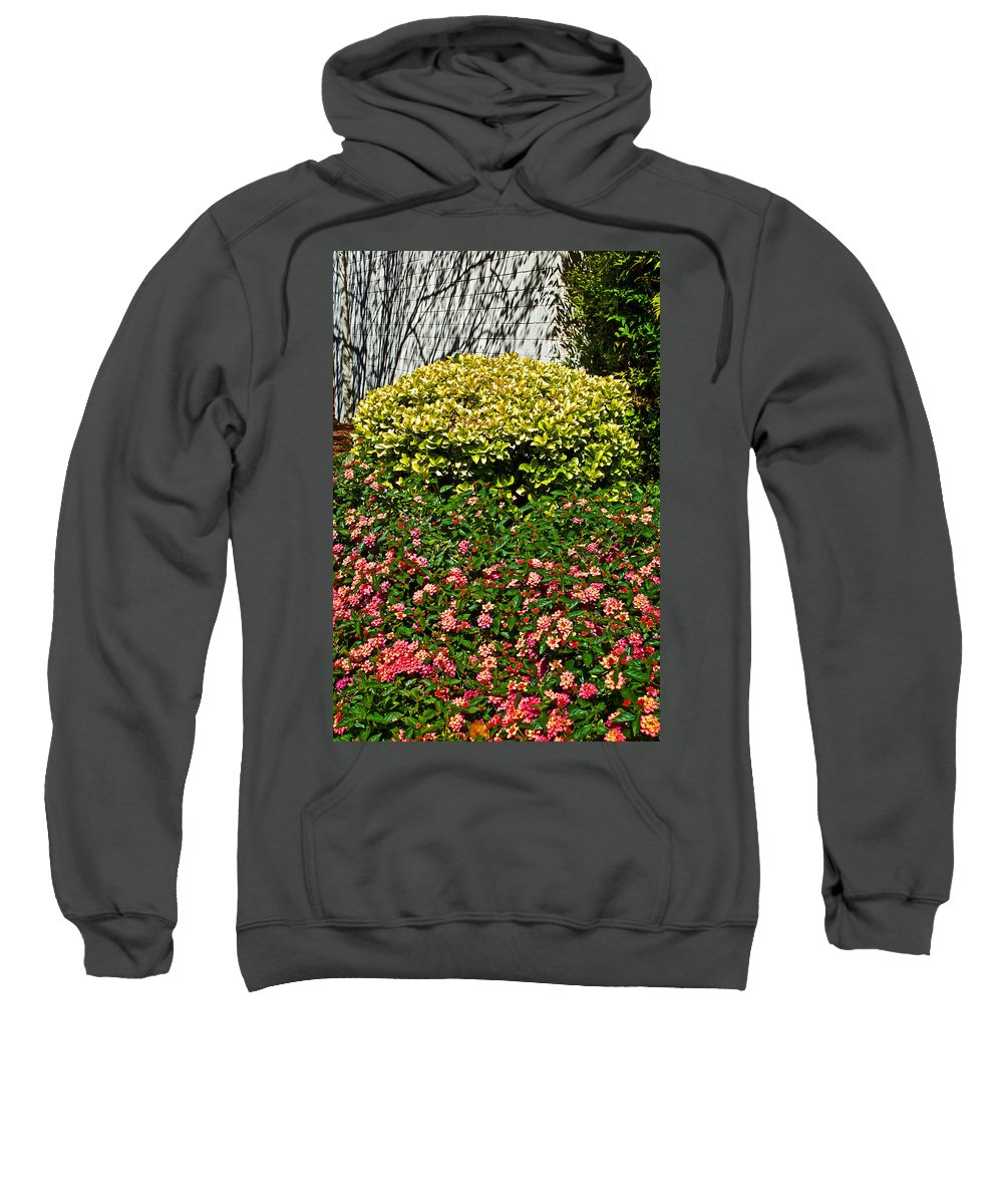 Yellow Coleus And Lantana At Pilgrim Place In Claremont Sweatshirt featuring the photograph Yellow Coleus And Lantana At Pilgrim Place In Claremont-california by Ruth Hager