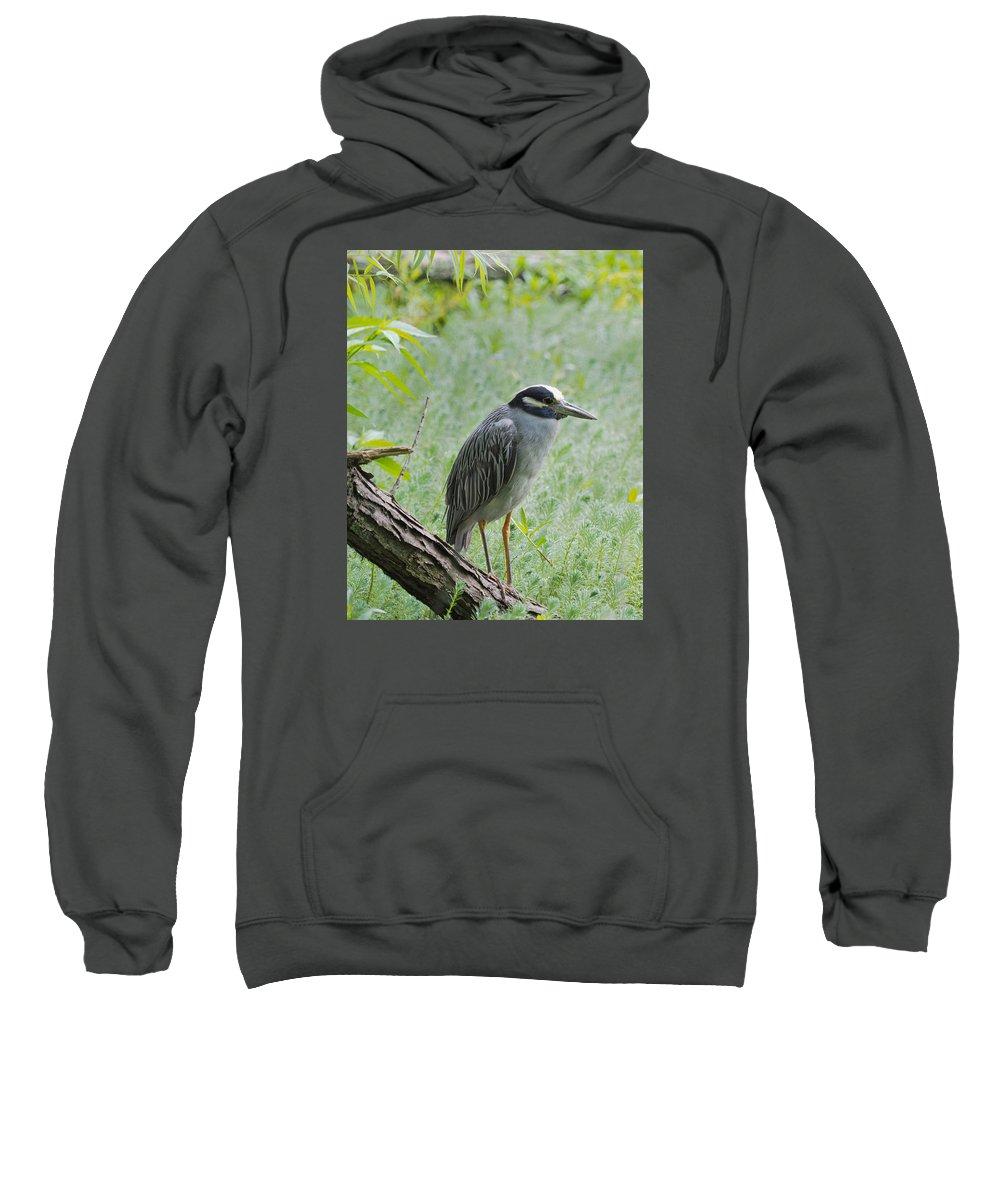 Heron Sweatshirt featuring the photograph Yellow-crowned Night Heron 1 by Paula Ponath