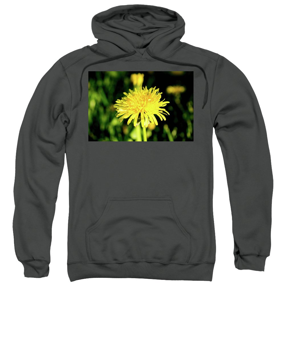 Olga Olay Sweatshirt featuring the photograph Yellow Dandelion Flower by Olga Olay
