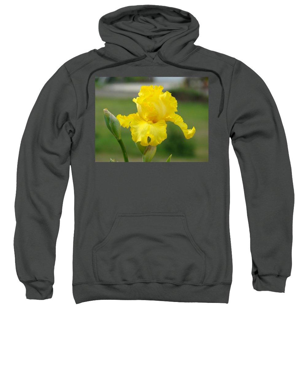 �irises Artwork� Sweatshirt featuring the photograph Yellow Iris Flowers Art Prints Cards Irises Summer Garden Landscape by Baslee Troutman