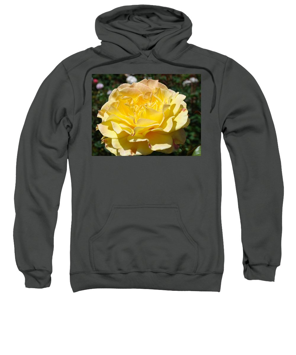Rose Sweatshirt featuring the photograph Yellow Rose Sunlit Summer Roses Flowers Art Prints Baslee Troutman by Baslee Troutman