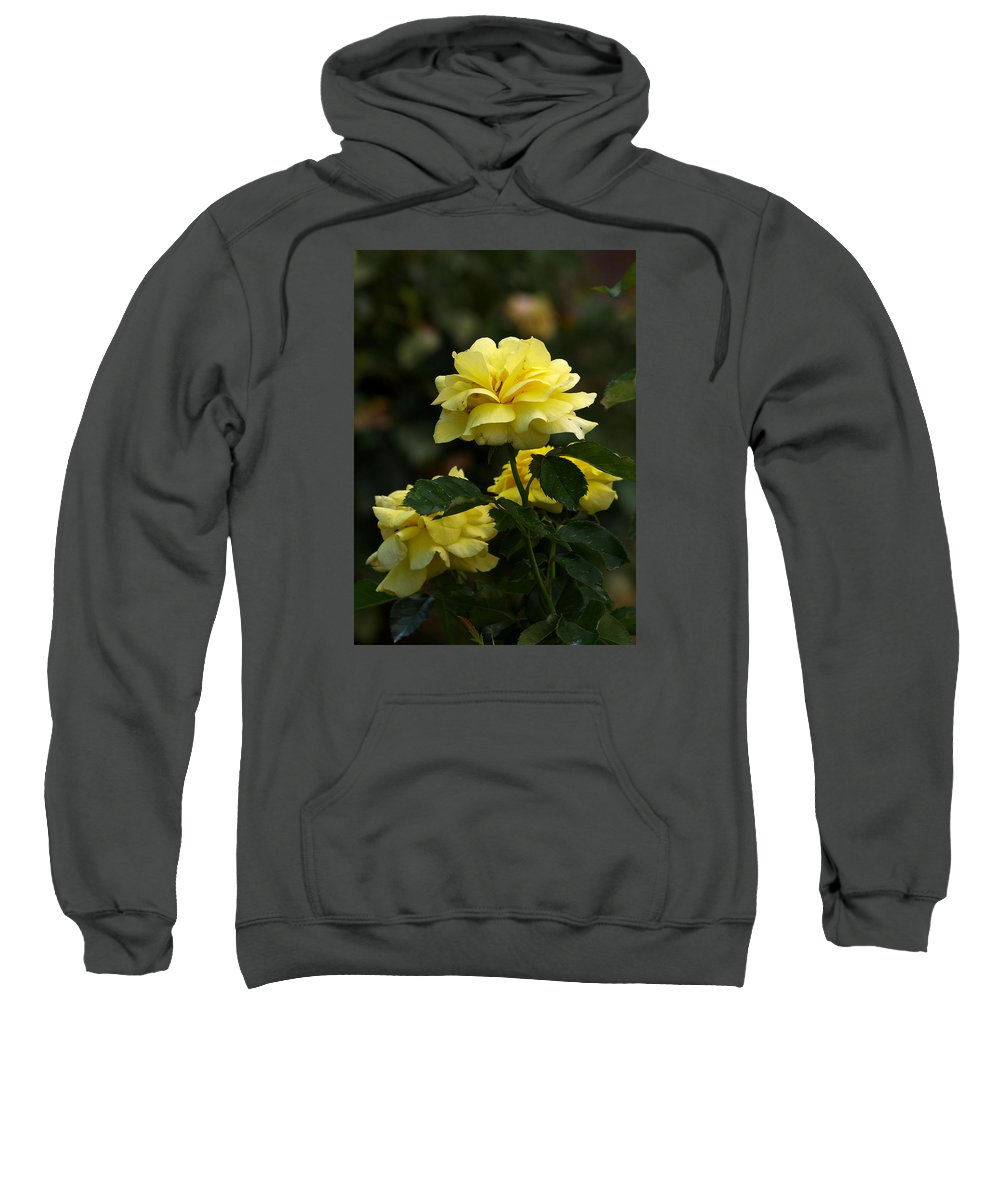Ann Keisling Sweatshirt featuring the photograph Yellow Roses by Ann Keisling