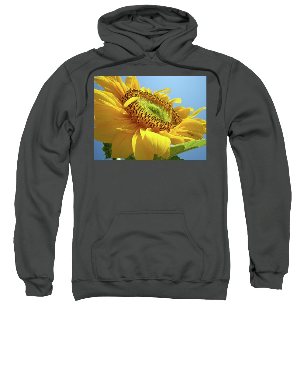 Sunflower Sweatshirt featuring the photograph Yellow Sunflower Blue Sky Art Prints Baslee Troutman by Baslee Troutman