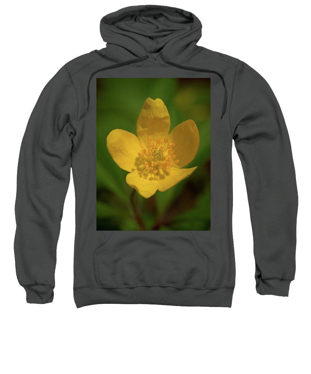 Lehtokukka Sweatshirt featuring the photograph Yellow Wood Anemone 2 by Jouko Lehto