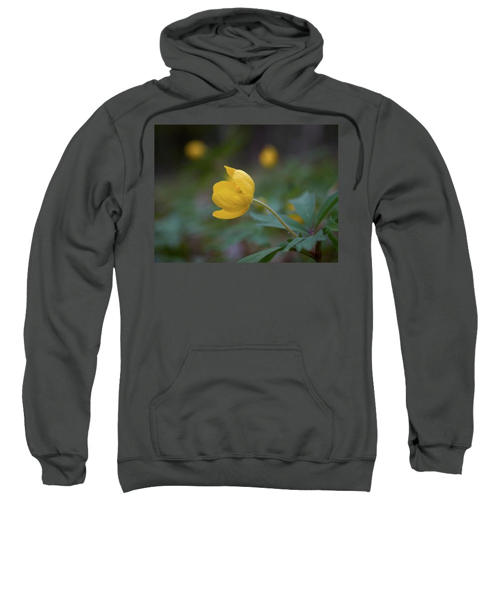 Lehtokukka Sweatshirt featuring the photograph Yellow Wood Anemone 5 by Jouko Lehto