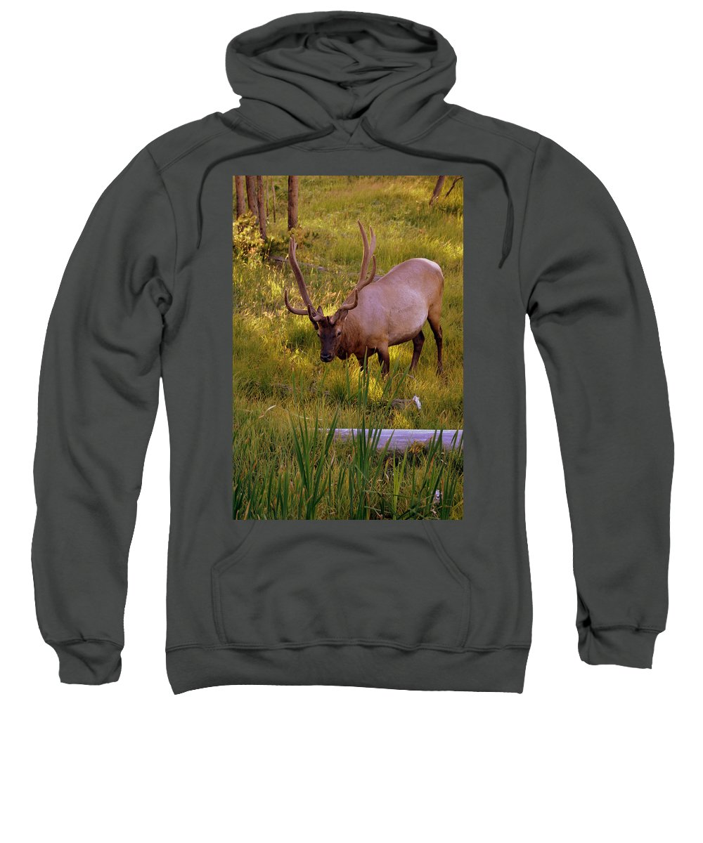 Elk Sweatshirt featuring the photograph Yellowstone Bull by Marty Koch