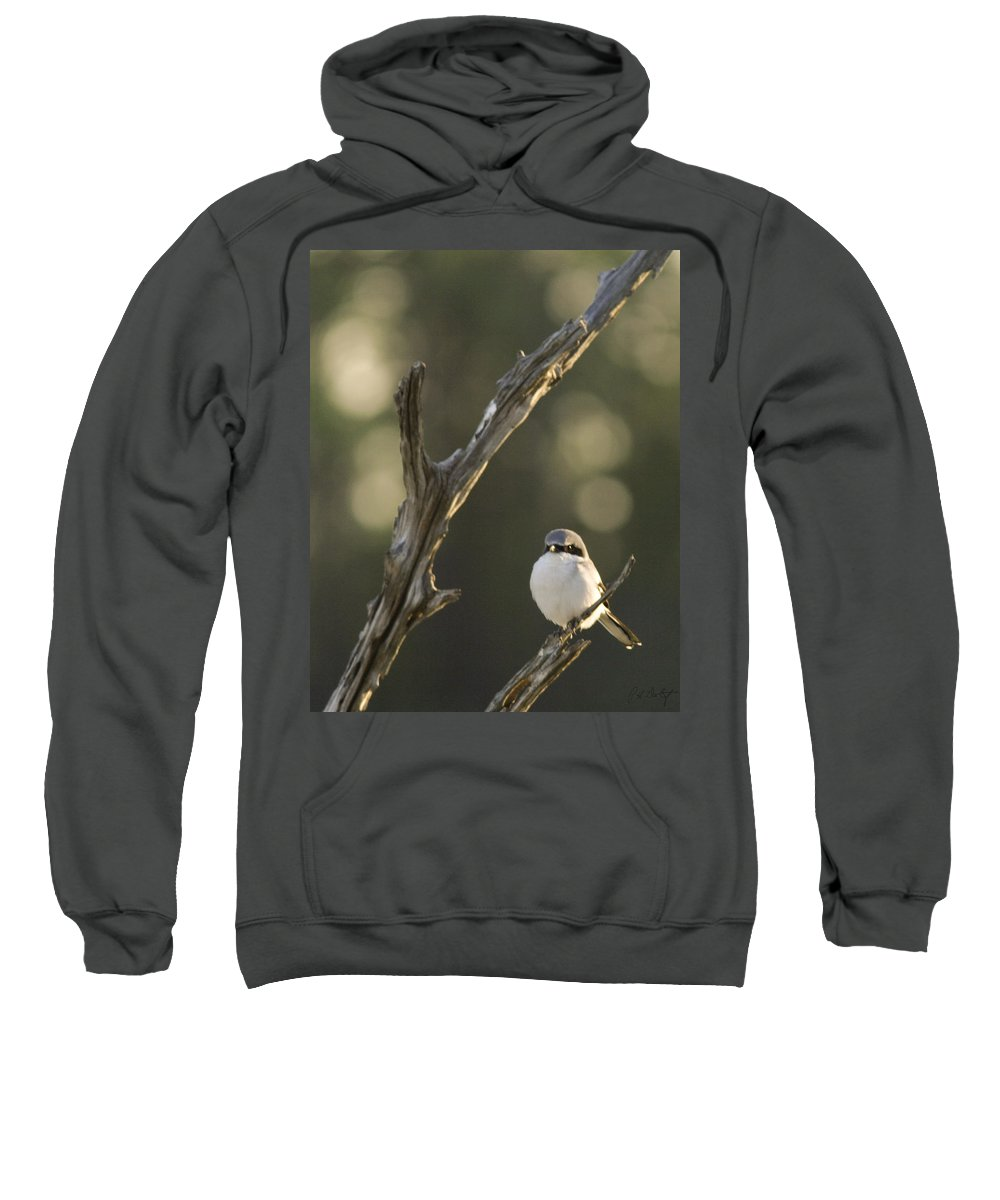 Bird Sweatshirt featuring the photograph You Lookin At Me by Phill Doherty