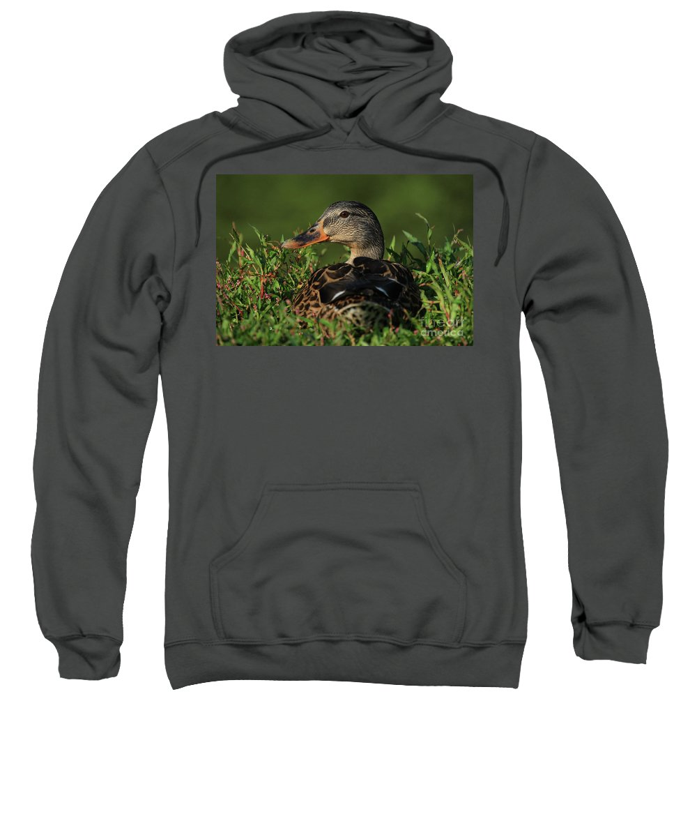 Animals Sweatshirt featuring the photograph You Looking At Me by Karol Livote