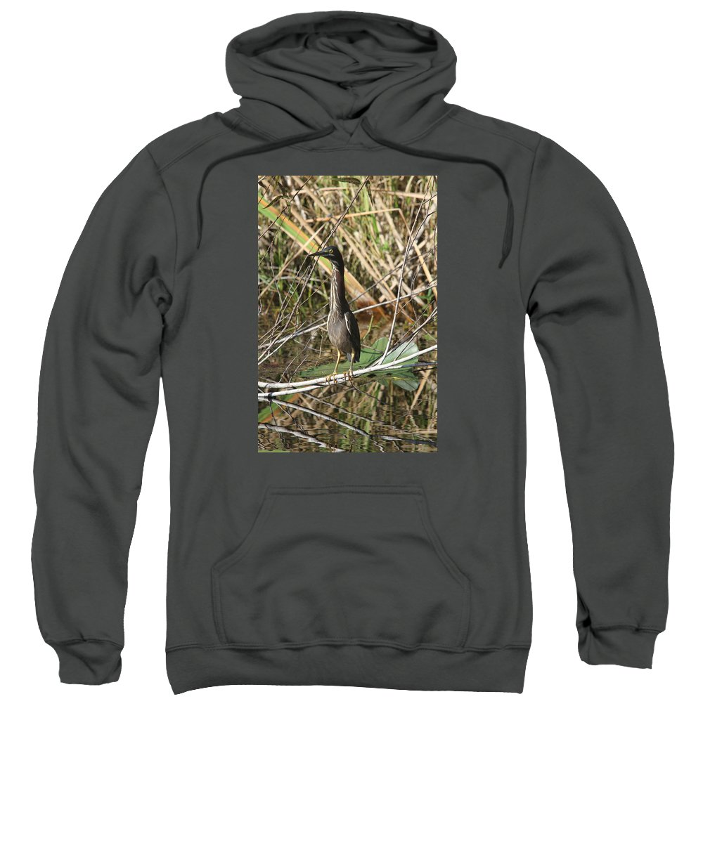 Green Heron Sweatshirt featuring the photograph Young Green Heron by Christiane Schulze Art And Photography
