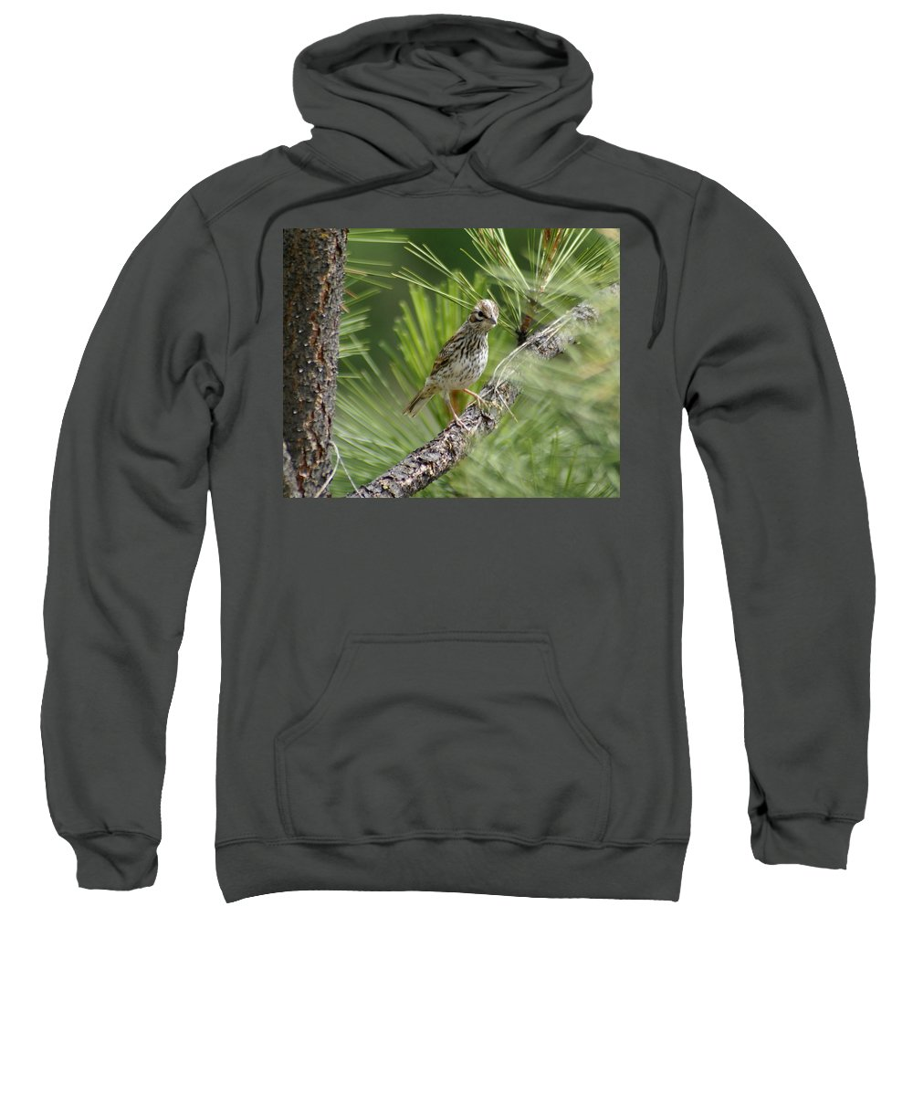 Birds Sweatshirt featuring the photograph Young Lark Sparrow 3 by Ben Upham III