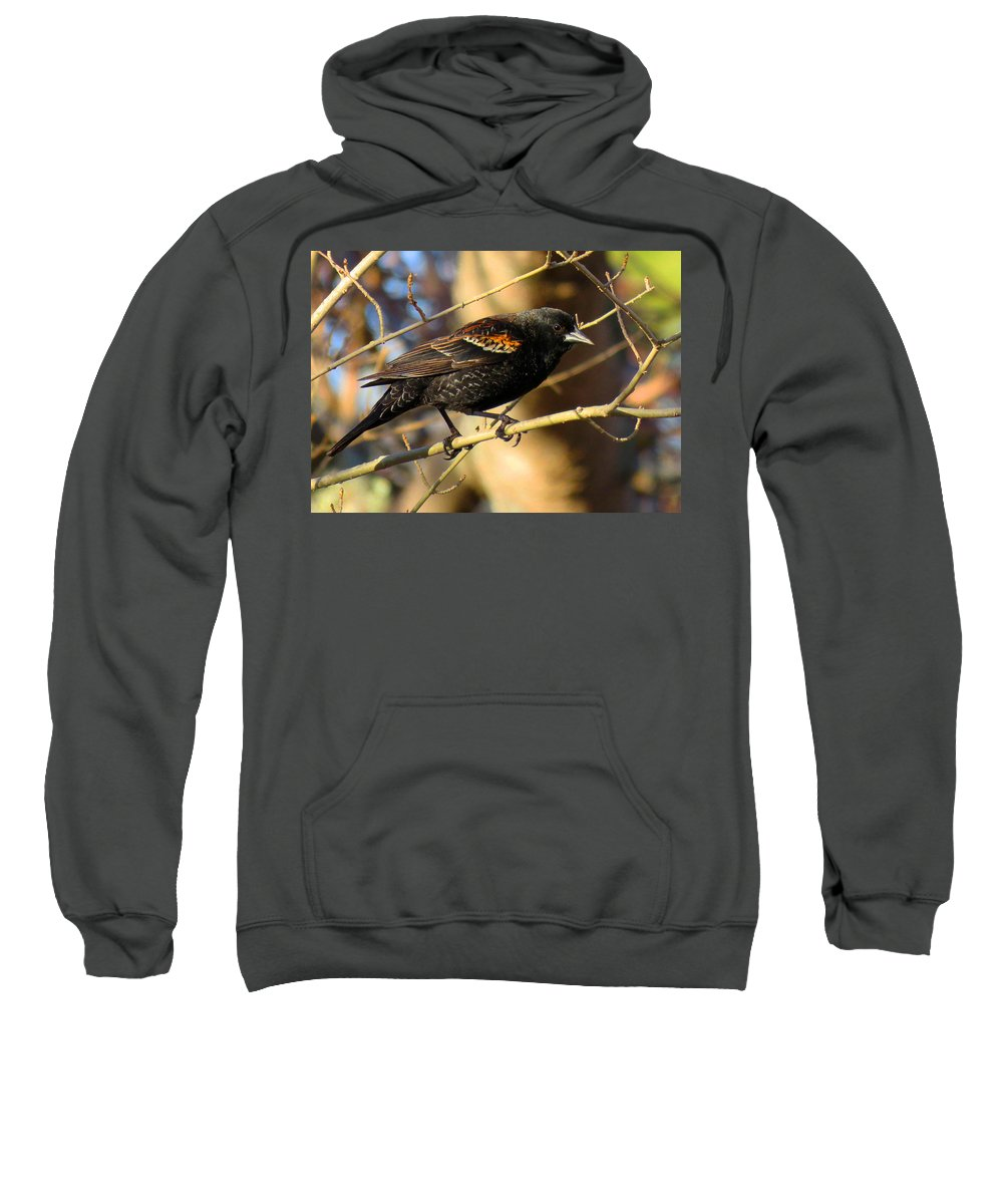 Red-winged Sweatshirt featuring the photograph Young Male Red-winged Black Bird by Dianne Cowen