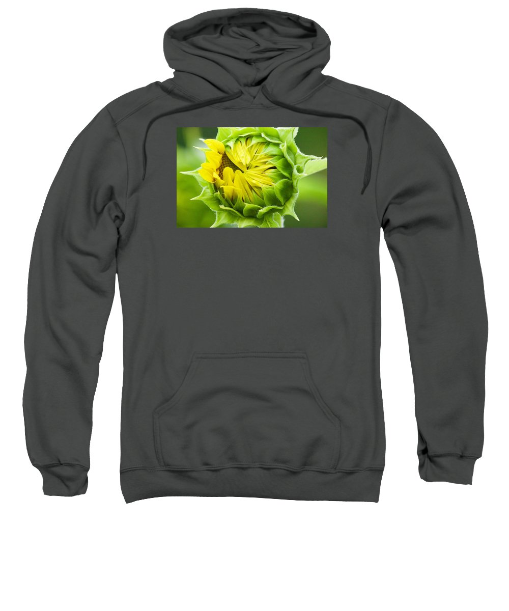 Flower Sweatshirt featuring the photograph Young Sunflower by Tiffany Erdman