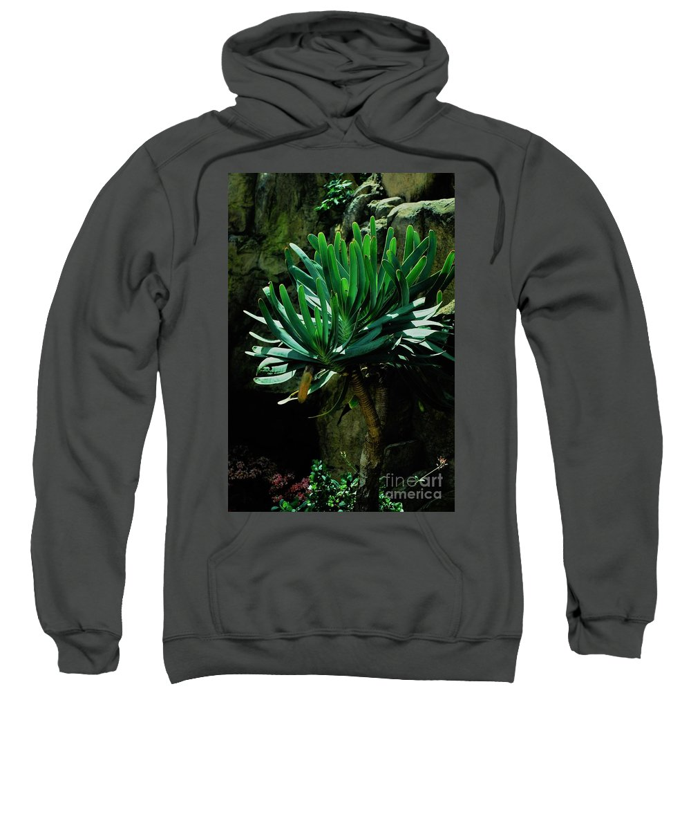 Yucca Sweatshirt featuring the photograph Yucca by Melissa McInnis
