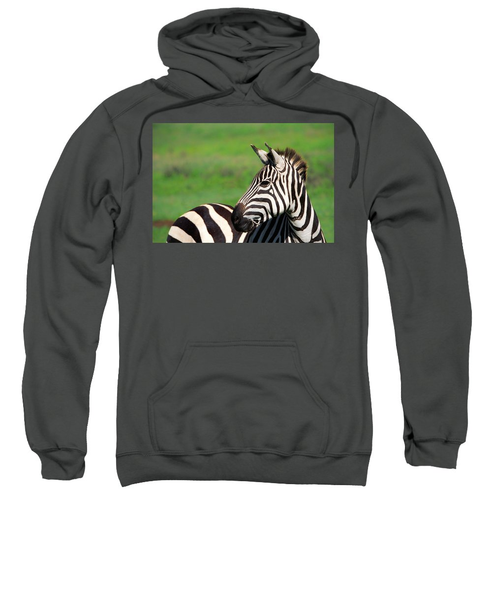 Africa Sweatshirt featuring the photograph Zebra by Sebastian Musial