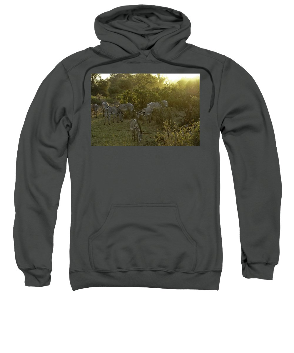 Africa Sweatshirt featuring the photograph Zebras In A Glen by Michele Burgess
