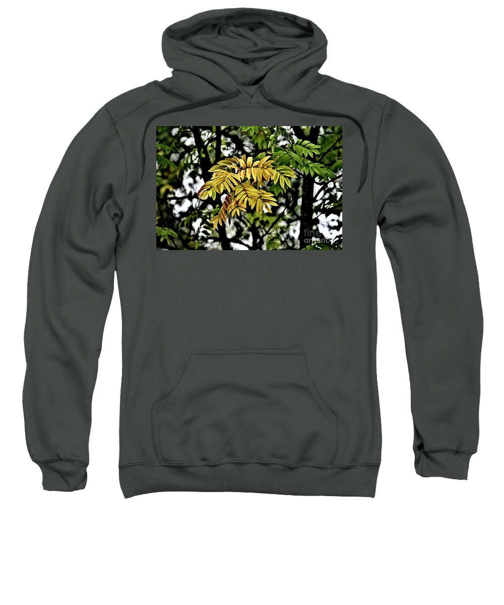 Rowan Sweatshirt featuring the photograph Fall Colors by Esko Lindell