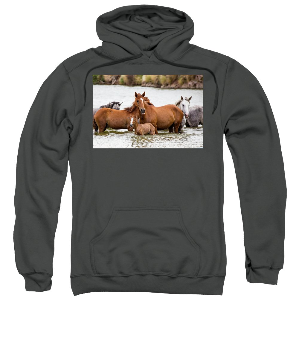 Arizona Sweatshirt featuring the photograph A Family Swim by Cathy Franklin