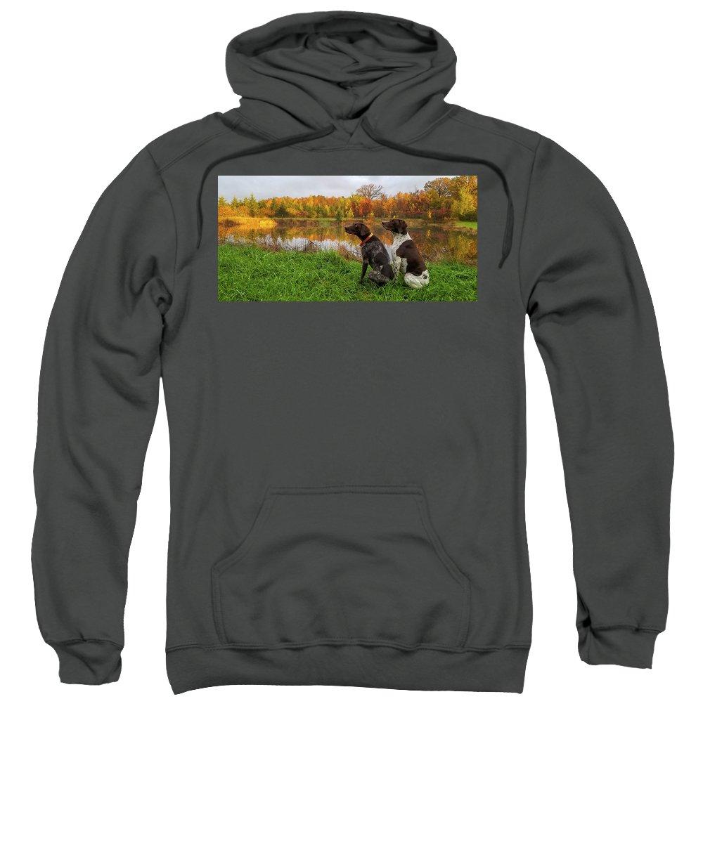 German Shorthair Pointer Sweatshirt featuring the photograph Autumn Pondering by Brook Burling