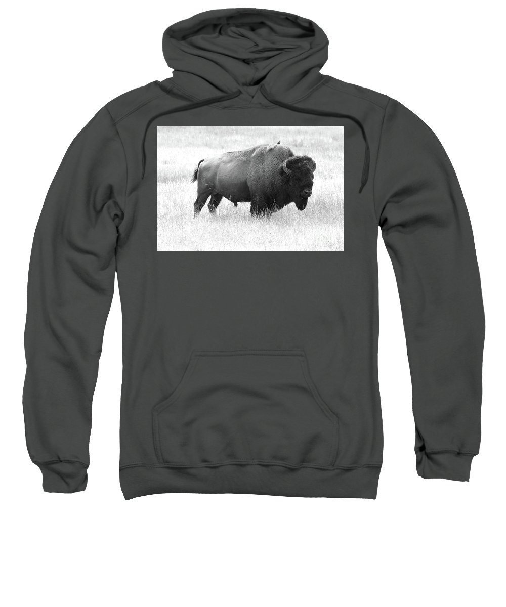 Bison Sweatshirt featuring the photograph Bison - Monochrome by Christiane Schulze Art And Photography