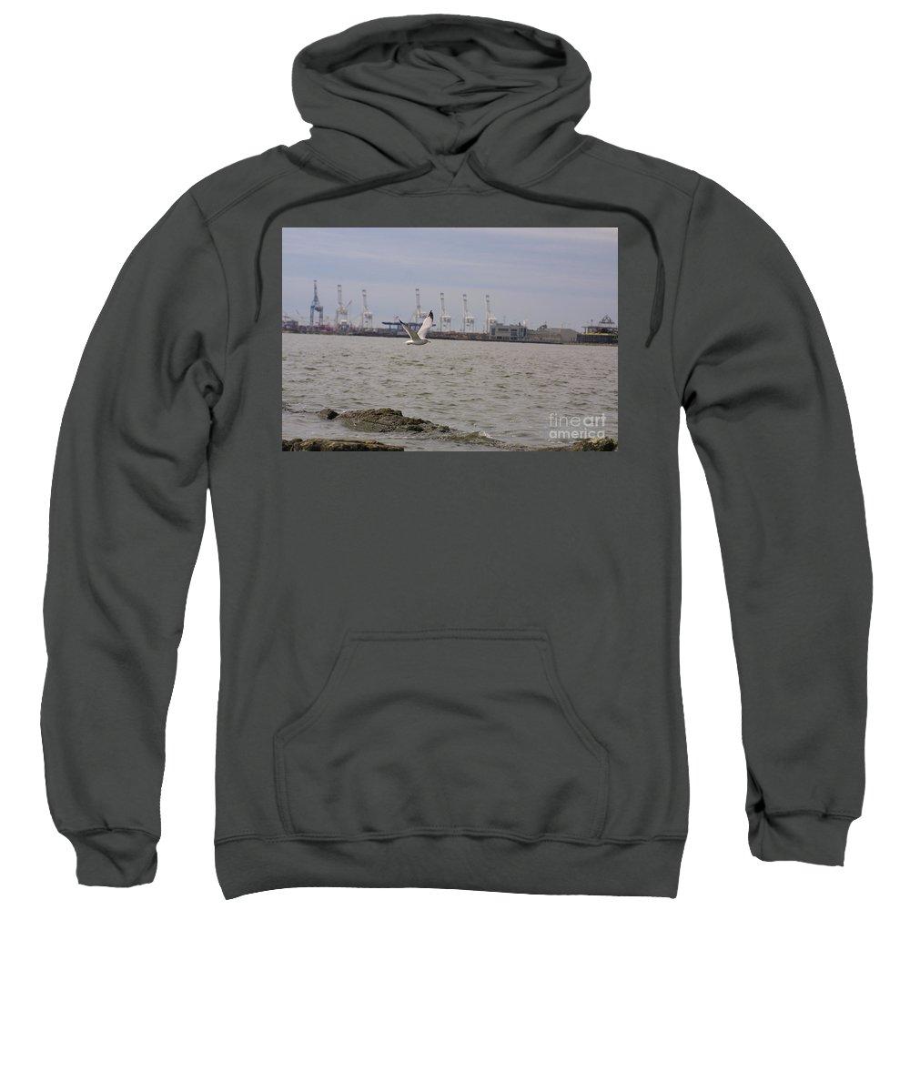 Bird In Flight Sweatshirt featuring the photograph Gull In Flight On New Jersey Bay by Darren Dwayne Frazier