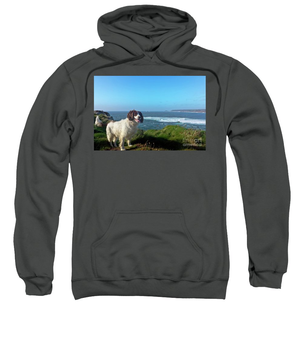 Cornwall Sweatshirt featuring the photograph Springer Spaniel Dog In Sennen Cove by Terri Waters
