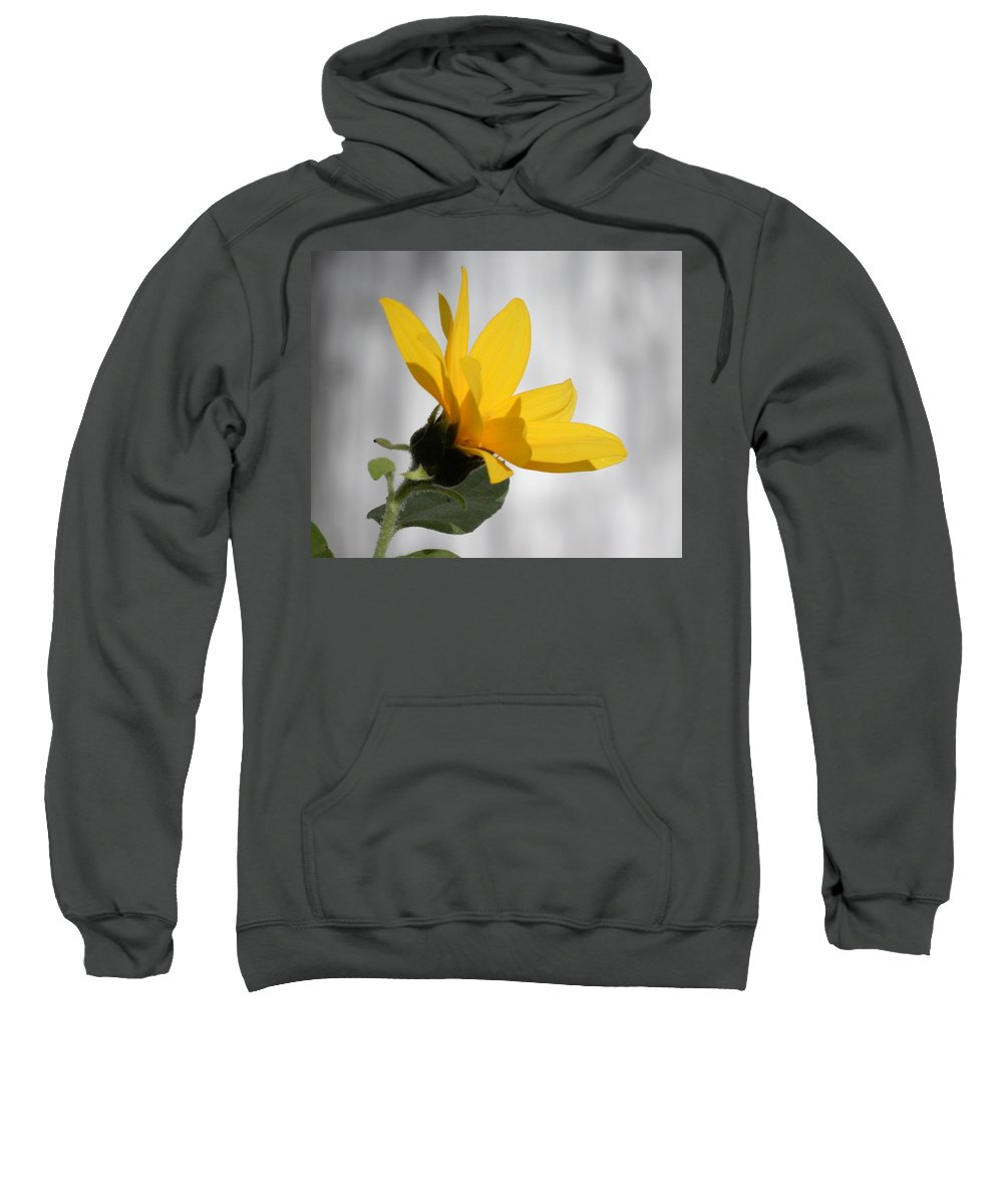 Sunflower Sweatshirt featuring the photograph Sunny Yellow Tiny Sunflower by Tina M Wenger