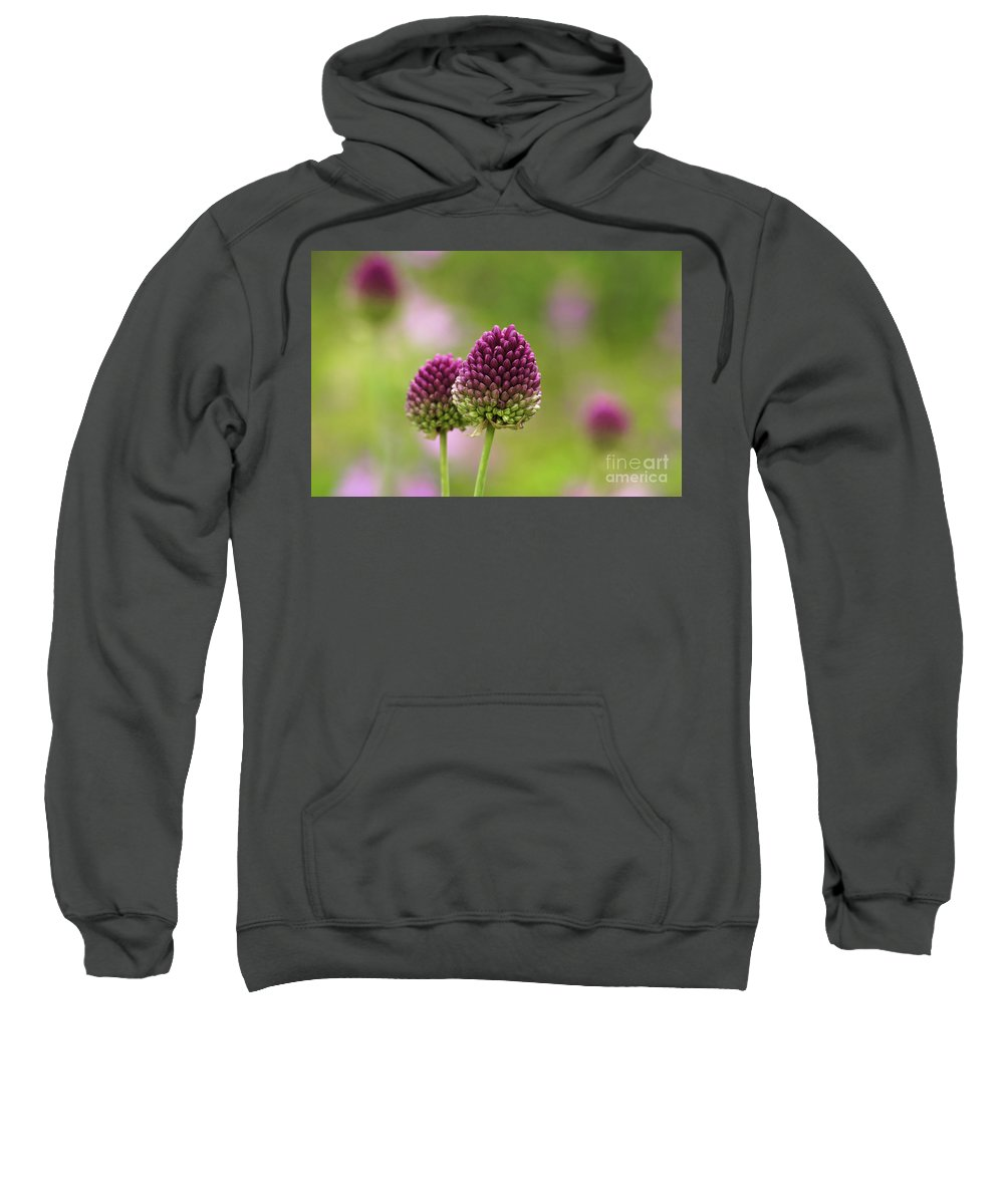 Abstract Agriculture Beautiful Bloom Blooming Blossom Britain British Close Closeup Colors Colours Cultivation Decoration Decorative Delicate Detail England English Europe European Field Flora Flower Flowerbed Flowers Garden Gardening Green Growing Growth Head Herb London Magenta Meadow Natural Park Parks Pink Plant Planted Plants Purple Red Round Round-headed Season Seasonal Spring Two Uk Up Vegetation Wallpaper Wild Wildflower Wildflowers Nobody Sweatshirt featuring the photograph Wild Purple Flowers by Marcin Rogozinski