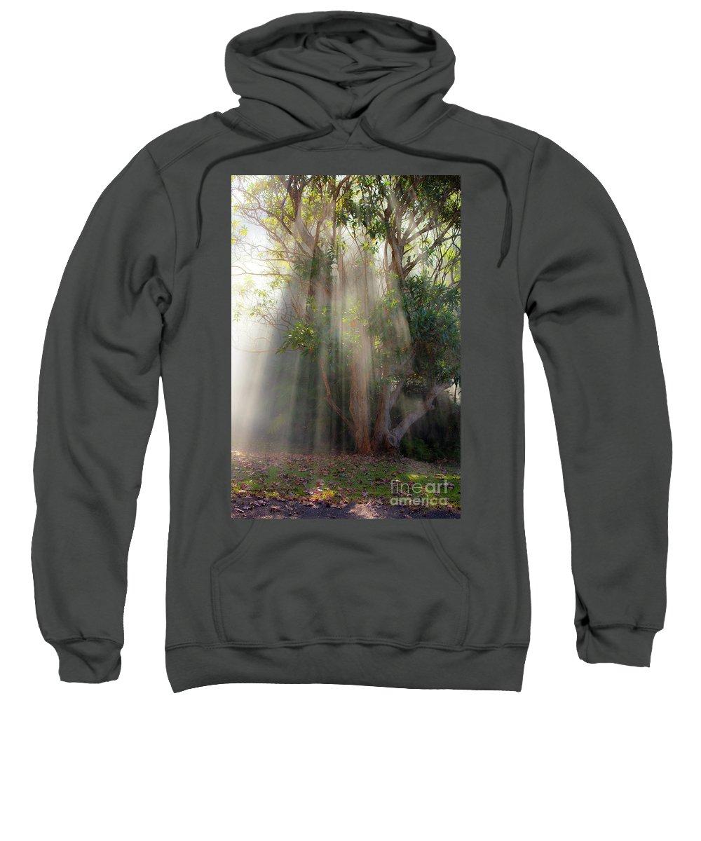Fall Sweatshirt featuring the photograph Lightbeams through tree by Sheila Smart Fine Art Photography