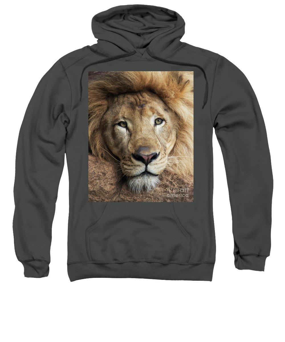 Lion Sweatshirt featuring the photograph Lion close up by Sheila Smart