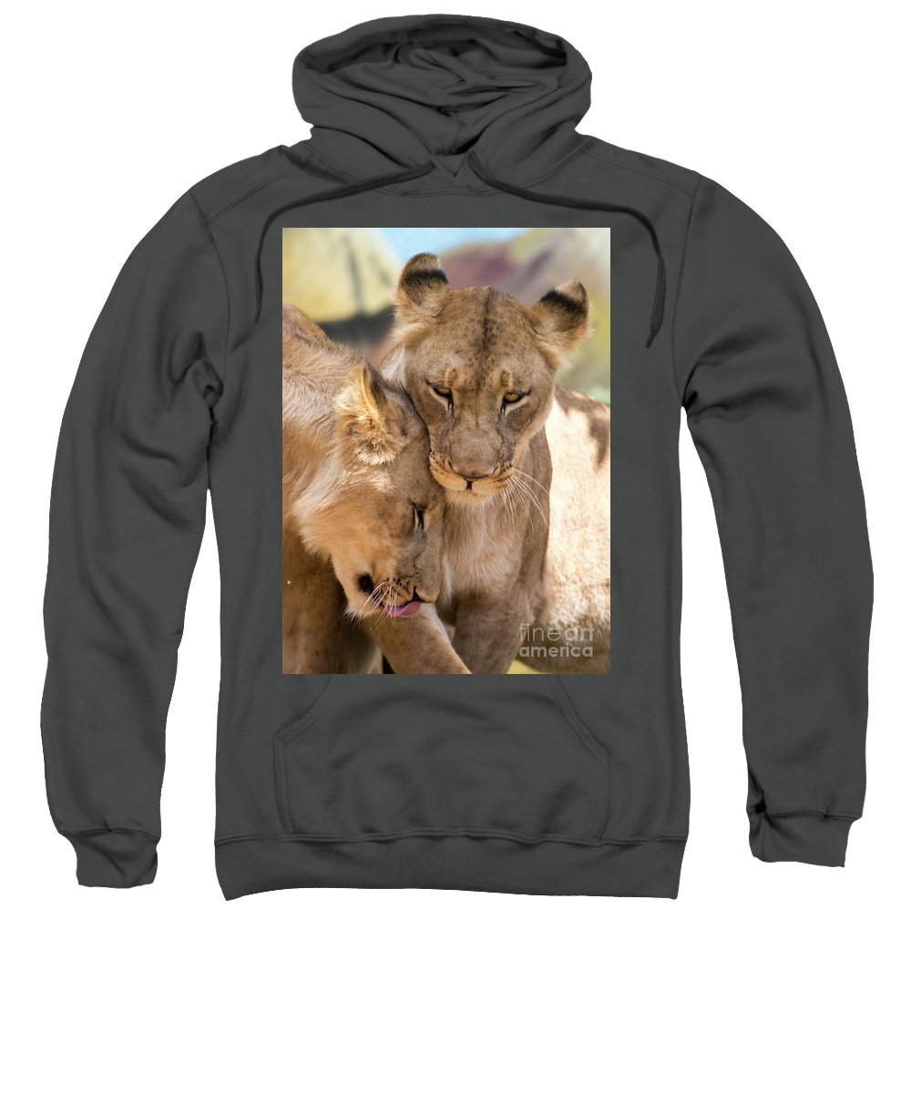 Lion Sweatshirt featuring the photograph Lioness with cub by Sheila Smart Fine Art Photography